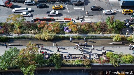 Biodiversity blooms in cities when green spaces go wild
